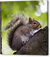 Squirrel Before Green Leaves Canvas Print