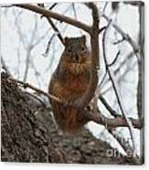 Squirrel Eating In The Frost Canvas Print