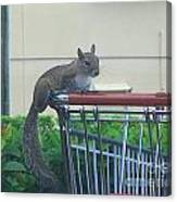 Squirrel Going Shopping Canvas Print