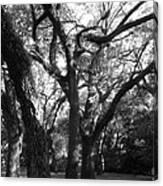 Squirrel Grove Canvas Print