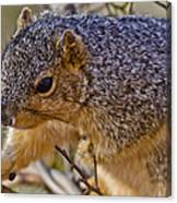 Squirrel Having A Heart Attack Canvas Print