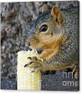 Squirrel Holding Corn Canvas Print