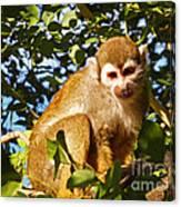 Squirrel Monkey Canvas Print