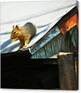 Squirrel On A Hot Tin Roof Canvas Print