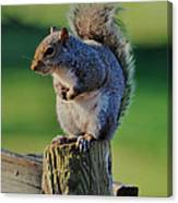 Squirrel Posing On Fence Post Posing - C9243c Canvas Print