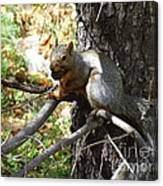 Squirrling Away Canvas Print