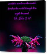 St. John 3  17  And Bee Balm Canvas Print