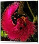 St Kitts Flora Canvas Print