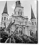 St Louis Cathedral Rising Above Palms Jackson Square French Quarter New Orleans Black And White Canvas Print