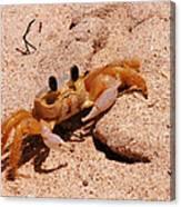 St. Lucia Crab On Beach Canvas Print