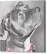 Staffordshire Terrier  Canvas Print