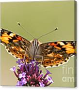 Stained Glass Lady Canvas Print