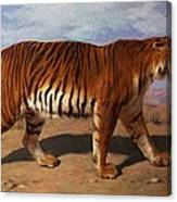 Stalking Tiger Canvas Print