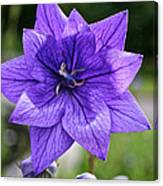 Star Balloon Flower Canvas Print