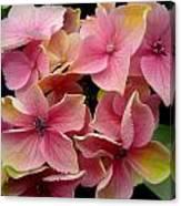 Star Flowers Canvas Print