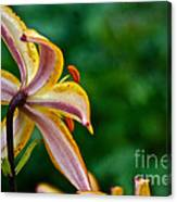 Star Lily Canvas Print
