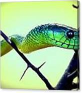 Staring Snake Canvas Print