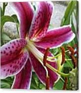 Starlight Lily Canvas Print