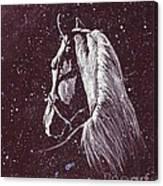 Starlight Serenade Canvas Print