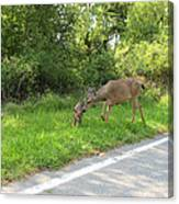 Stay Off The Road Bambi Canvas Print