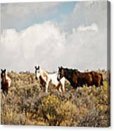Steens Wild Horses Canvas Print