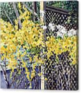 Stella Magnolia and Forthysia Canvas Print