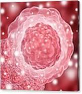 Stem Cell, Conceptual Artwork Canvas Print