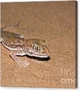 Stenodactylus Petrii Or Dune Gecko Canvas Print