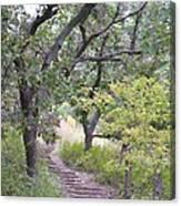 Steps Trail Canvas Print
