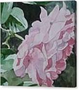 Still Cool Canvas Print