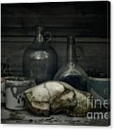 Still Life With Bear Skull Canvas Print