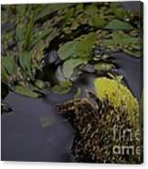 Stirring The Swamp Pot Canvas Print