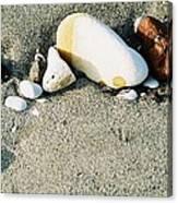 Stones On The Beach Canvas Print