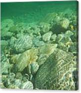 Stones Under The Water Canvas Print