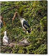 Storks Around A Nest Canvas Print