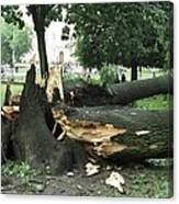 Storm Damage Canvas Print