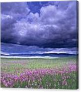 Stormy Clouds Approaching Field Of Canvas Print