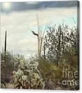Stormy Sunshine Canvas Print