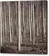 Straight Trees Canvas Print