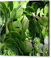 Strand Succulent Canvas Print