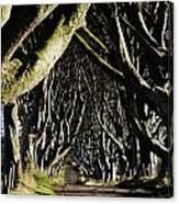 Stranocum, Co. Antrim, Ireland Canvas Print