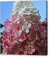 Strawberry Vanilla Hydrangea Canvas Print