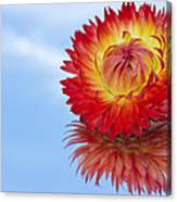 Strawflower Reflection Canvas Print
