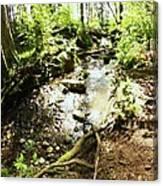 Stream At Devonian Park Canvas Print