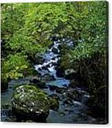Stream Flowing Through A Forest Canvas Print