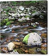 Stream In Nova Scotia Canvas Print
