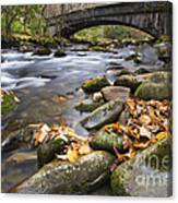 Stream In The Great Smokie Mountain National Park Canvas Print