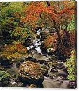 Stream Near Glengariff, Co Cork, Ireland Canvas Print