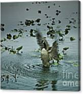Stretching His Wings Canvas Print