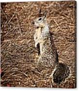 Strike A Squirrelly Pose Canvas Print